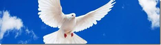 peacedove2
