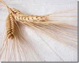 wheathead